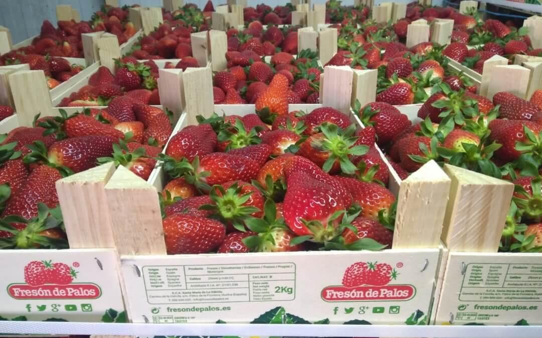 El Banco de Alimentos de Huelva recibe una donación de 15.200 kilos de fresas de Fresón de Palos